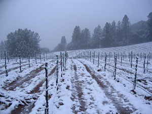 Shaker Ridge Vineyard in winter