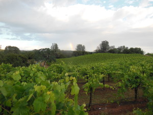 rainbow over barbera 5-21-14b