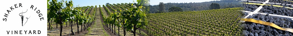 Shaker Ridge Vineyard
